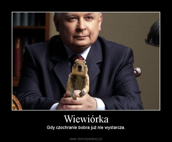 Wiewiórka – Gdy czochranie bobra już nie wystarcza.