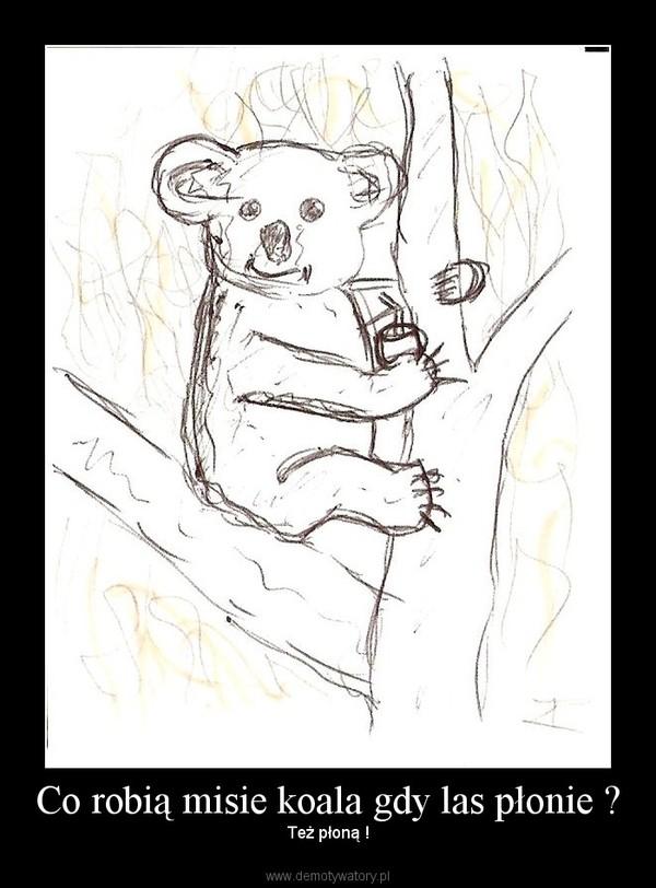 Co robią misie koala gdy las płonie ? – Też płoną !