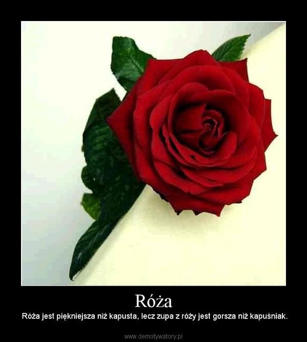 Róża –  Róża jest piękniejsza niż kapusta, lecz zupa z róży jest gorsza niż kapuśniak.