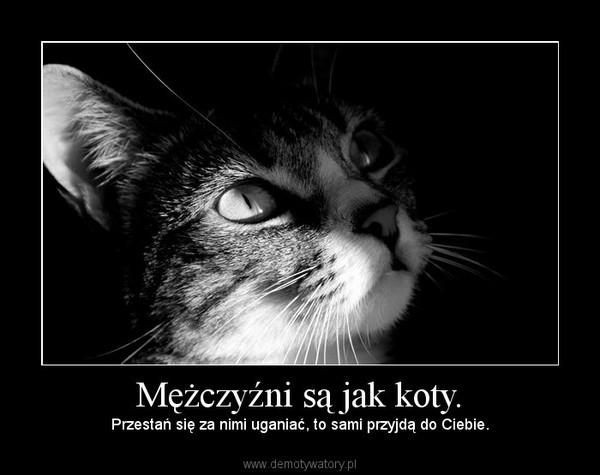 Mężczyźni są jak koty. – Przestań się za nimi uganiać, to sami przyjdą do Ciebie.