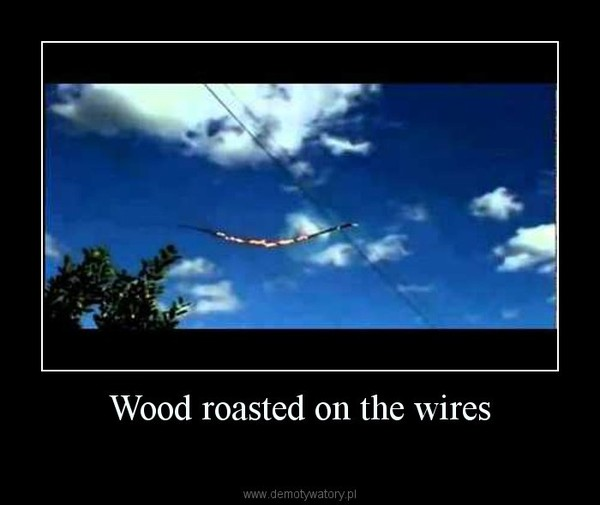 Wood roasted on the wires –