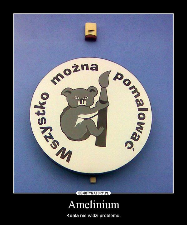 Amelinium – Koala nie widzi problemu.