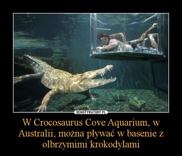 W Crocosaurus Cove Aquarium, w Australii, można pływać w basenie z olbrzymimi krokodylami –