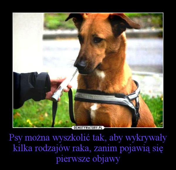 Psy można wyszkolić tak, aby wykrywały kilka rodzajów raka, zanim pojawią się pierwsze objawy –