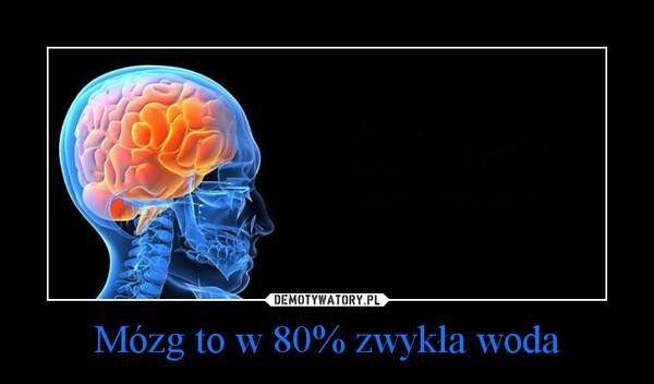 Mózg to w 80% zwykła woda –