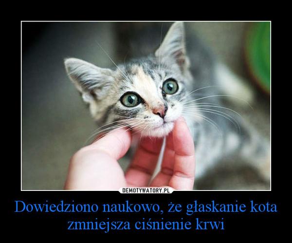 Dowiedziono naukowo, że głaskanie kota zmniejsza ciśnienie krwi –