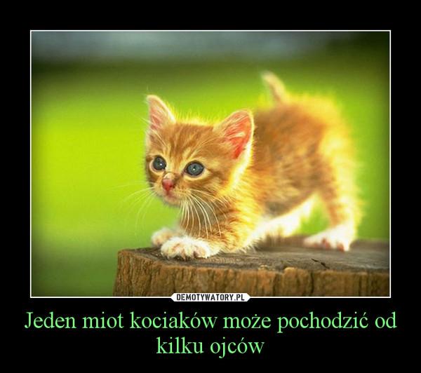 Jeden miot kociaków może pochodzić od kilku ojców –