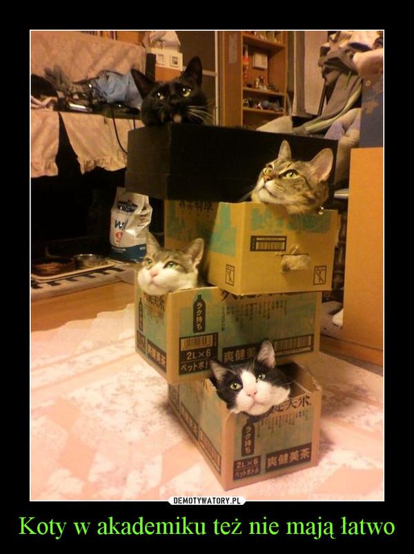 Koty w akademiku też nie mają łatwo –