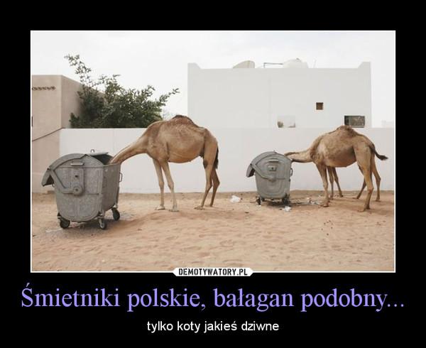 Śmietniki polskie, bałagan podobny... – tylko koty jakieś dziwne