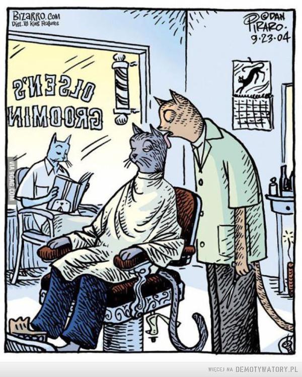 Koci fryzjer –