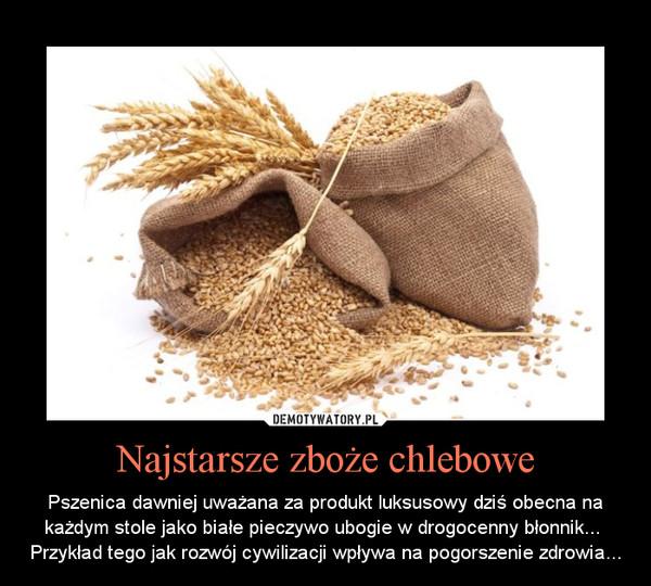 Najstarsze zboże chlebowe – Pszenica dawniej uważana za produkt luksusowy dziś obecna na każdym stole jako białe pieczywo ubogie w drogocenny błonnik... \nPrzykład tego jak rozwój cywilizacji wpływa na pogorszenie zdrowia...
