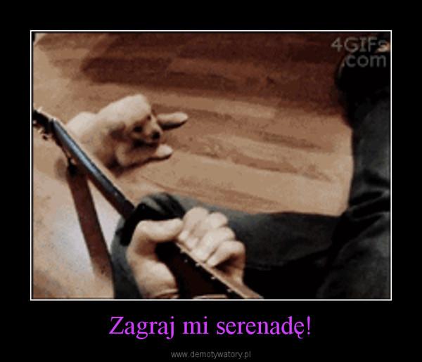 Zagraj mi serenadę! –