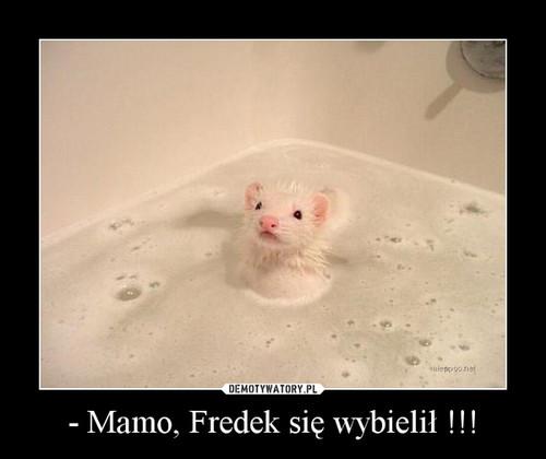 - Mamo, Fredek się wybielił !!!