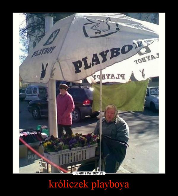 króliczek playboya –