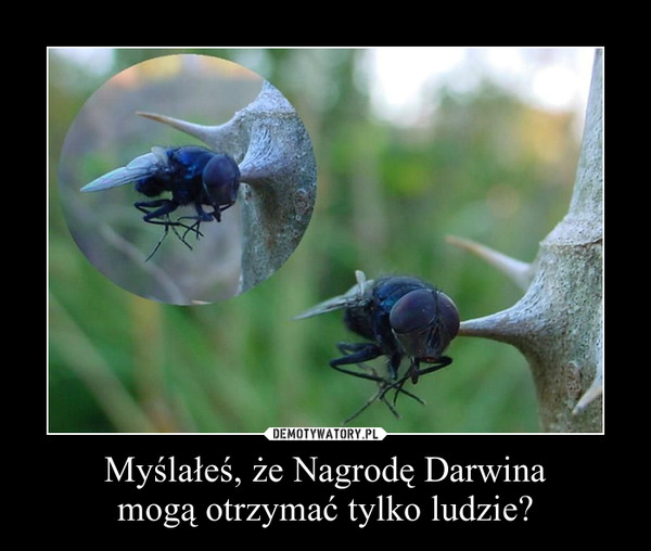 Myślałeś, że Nagrodę Darwinamogą otrzymać tylko ludzie? –