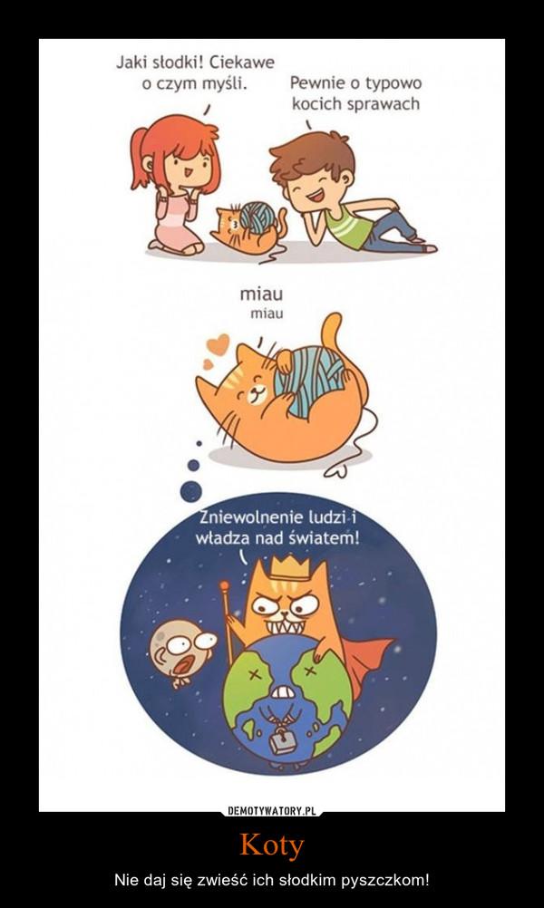 Koty – Nie daj się zwieść ich słodkim pyszczkom!