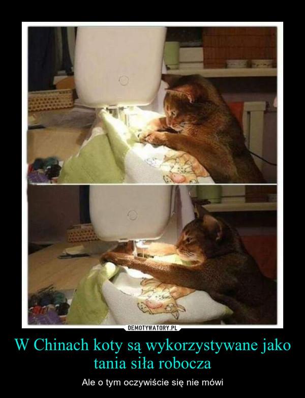 W Chinach koty są wykorzystywane jako tania siła robocza – Ale o tym oczywiście się nie mówi