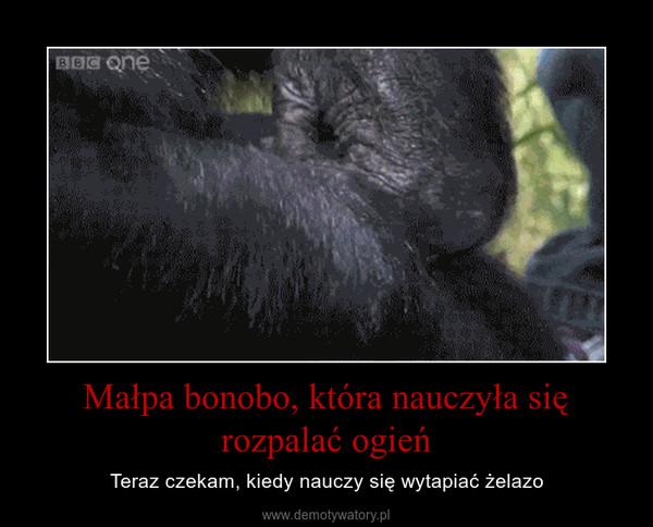 Małpa bonobo, która nauczyła się rozpalać ogień – Teraz czekam, kiedy nauczy się wytapiać żelazo