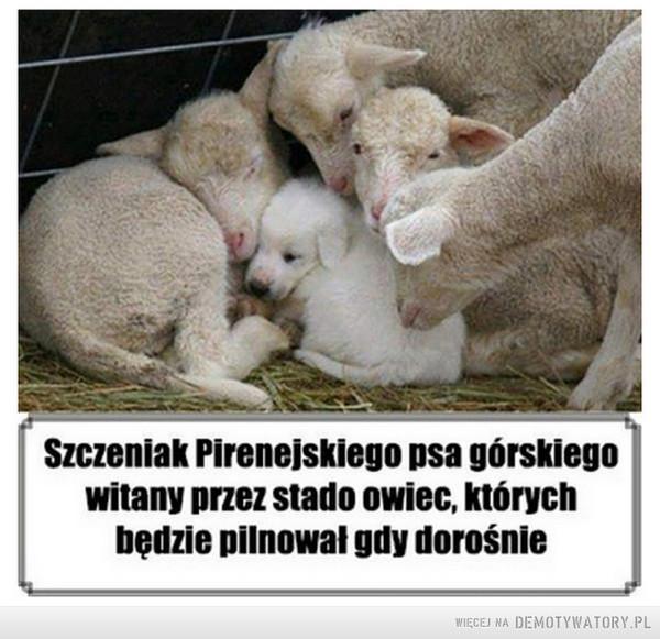 Zwierzęta –