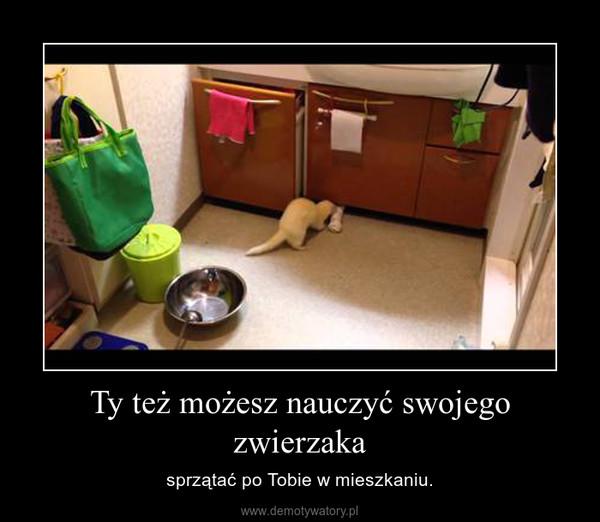 Ty też możesz nauczyć swojego zwierzaka – sprzątać po Tobie w mieszkaniu.