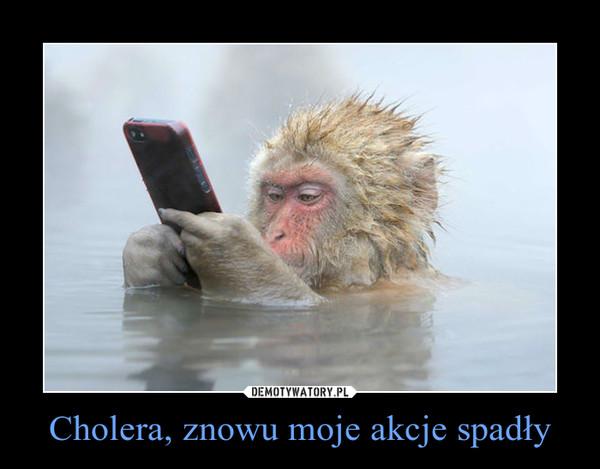 Cholera, znowu moje akcje spadły –