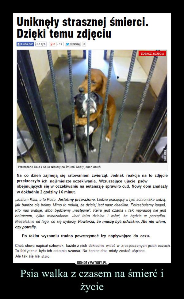 """Psia walka z czasem na śmierć i życie –  Uniknęły strasznej śmierci. Dzięki temu zdjęciuNa co dzień zajmują się ratowaniem zwierząt. Jednak reakcja na to zdjęcie przekroczyła ich najśmielsze oczekiwania. Wzruszające ujęcie psów obejmujących się w oczekiwaniu na eutanazję sprawiło cud. Nowy dom znalazły w dokładnie 2 godziny i 6 minut.""""Jestem Kala, a to Keira. Jesteśmy przerażone. Ludzie pracujący w tym schronisku widzą, jak bardzo się boimy. Mimo to mówią, że dzisiaj jest nasz deadline. Potrzebujemy kogoś, kto nas uratuje, albo będziemy """"następne"""". Keira jest czarna i tak naprawdę nie jest bokserem, tylko mieszańcem. Jest taka dzielna i mówi, że będzie w porządku. Niezależnie od tego, co się wydarzy. Powtarza, że muszę być odważna. Ale nie wiem, czy potrafię.Po takim wyznaniu trudno powstrzymać łzy napływające do oczu.Choć słowa napisał człowiek, każde z nich dokładnie widać w zrozpaczonych psich oczach. To faktycznie była ich ostatnia szansa. Na koniec dnia miały zostać uśpione. Ale tak się nie stało."""