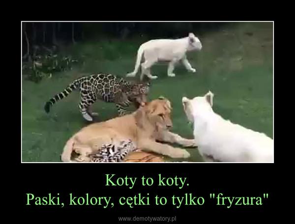 "Koty to koty.Paski, kolory, cętki to tylko ""fryzura"" –"