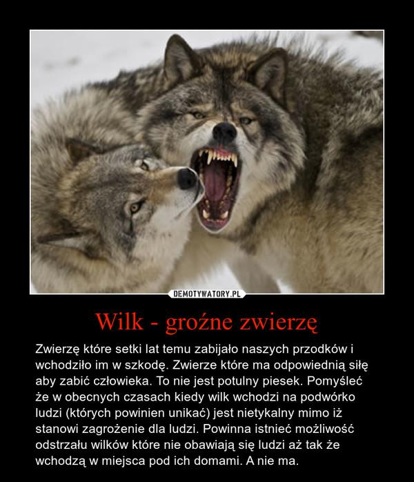 Wilk - groźne zwierzę – Zwierzę które setki lat temu zabijało naszych przodków i wchodziło im w szkodę. Zwierze które ma odpowiednią siłę aby zabić człowieka. To nie jest potulny piesek. Pomyśleć że w obecnych czasach kiedy wilk wchodzi na podwórko ludzi (których powinien unikać) jest nietykalny mimo iż stanowi zagrożenie dla ludzi. Powinna istnieć możliwość odstrzału wilków które nie obawiają się ludzi aż tak że wchodzą w miejsca pod ich domami. A nie ma.
