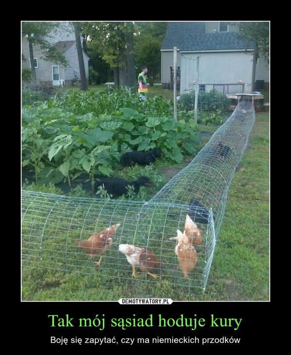 Tak mój sąsiad hoduje kury – Boję się zapytać, czy ma niemieckich przodków
