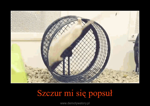 Szczur mi się popsuł –