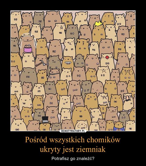 Pośród wszystkich chomikówukryty jest ziemniak – Potrafisz go znaleźć?
