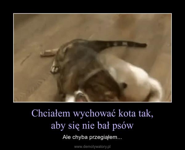 Chciałem wychować kota tak,aby się nie bał psów – Ale chyba przegiąłem...
