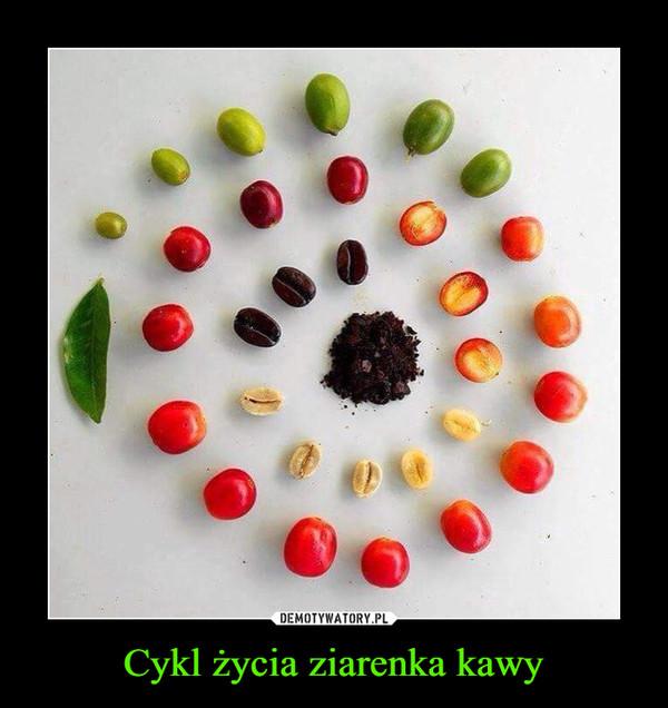 Cykl życia ziarenka kawy –