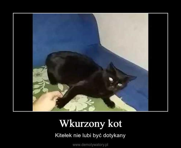 Wkurzony kot – Kitełek nie lubi być dotykany