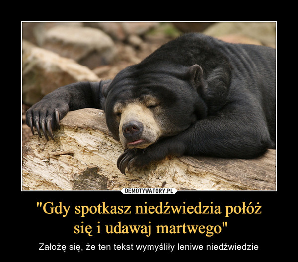 """""""Gdy spotkasz niedźwiedzia połóż się i udawaj martwego"""" – Założę się, że ten tekst wymyśliły leniwe niedźwiedzie"""