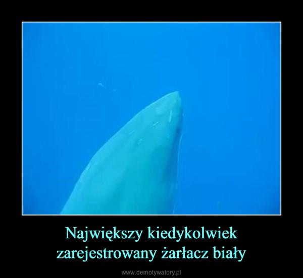 Największy kiedykolwiek zarejestrowany żarłacz biały –