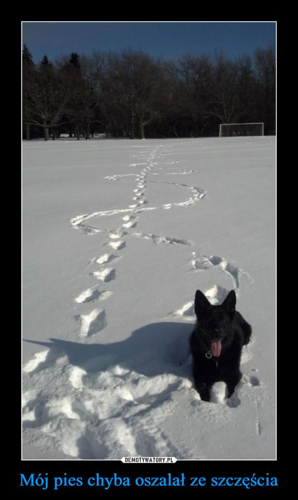 Mój pies chyba oszalał ze szczęścia –