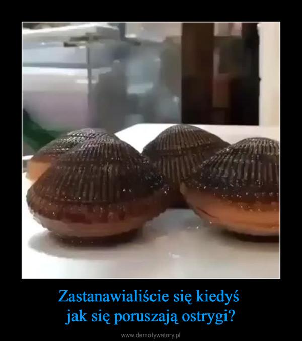 Zastanawialiście się kiedyś jak się poruszają ostrygi? –