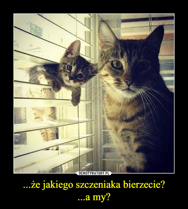 ...że jakiego szczeniaka bierzecie?...a my? –