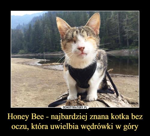 Honey Bee - najbardziej znana kotka bez oczu, która uwielbia wędrówki w góry