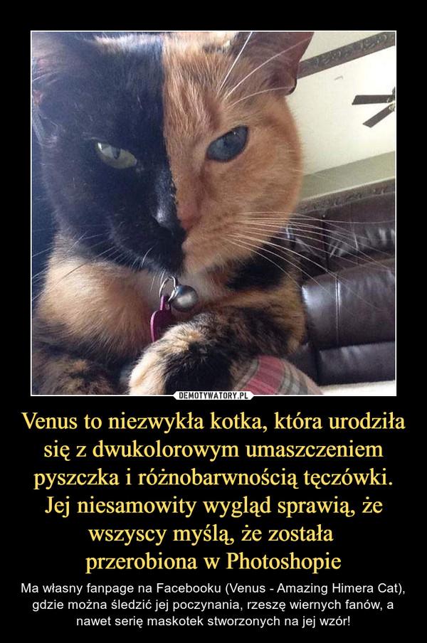 Venus to niezwykła kotka, która urodziła się z dwukolorowym umaszczeniem pyszczka i różnobarwnością tęczówki. Jej niesamowity wygląd sprawią, że wszyscy myślą, że została przerobiona w Photoshopie – Ma własny fanpage na Facebooku (Venus - Amazing Himera Cat), gdzie można śledzić jej poczynania, rzeszę wiernych fanów, a nawet serię maskotek stworzonych na jej wzór!