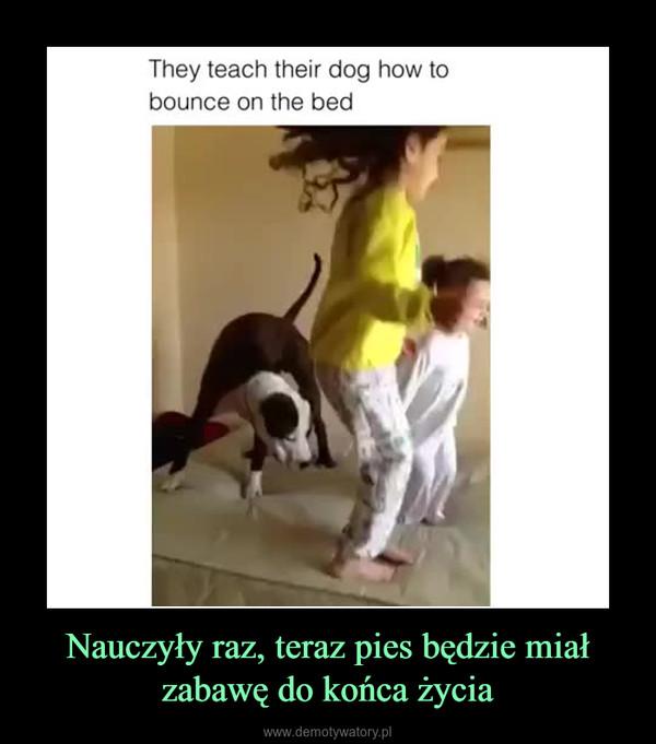 Nauczyły raz, teraz pies będzie miał zabawę do końca życia –