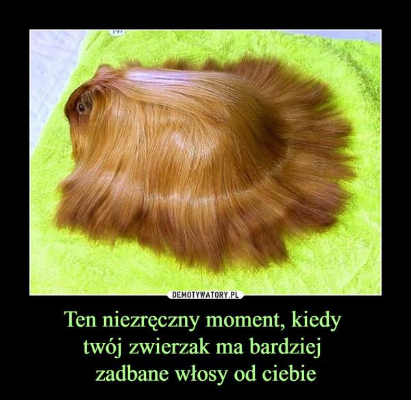 Ten niezręczny moment, kiedy twój zwierzak ma bardziej zadbane włosy od ciebie –