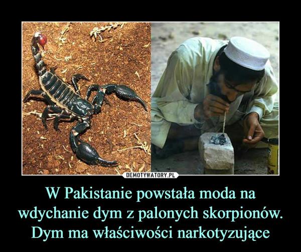 W Pakistanie powstała moda na wdychanie dym z palonych skorpionów. Dym ma właściwości narkotyzujące –