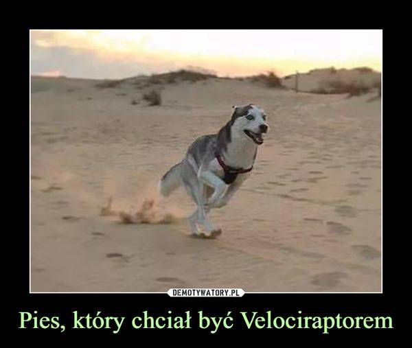 Pies, który chciał być Velociraptorem –