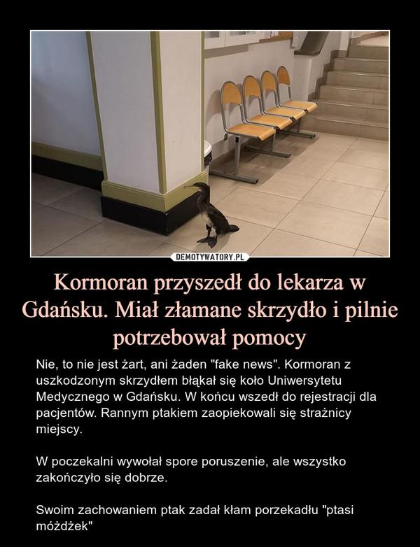 """Kormoran przyszedł do lekarza w Gdańsku. Miał złamane skrzydło i pilnie potrzebował pomocy – Nie, to nie jest żart, ani żaden """"fake news"""". Kormoran z uszkodzonym skrzydłem błąkał się koło Uniwersytetu Medycznego w Gdańsku. W końcu wszedł do rejestracji dla pacjentów. Rannym ptakiem zaopiekowali się strażnicy miejscy.W poczekalni wywołał spore poruszenie, ale wszystko zakończyło się dobrze.Swoim zachowaniem ptak zadał kłam porzekadłu """"ptasi móżdżek"""""""
