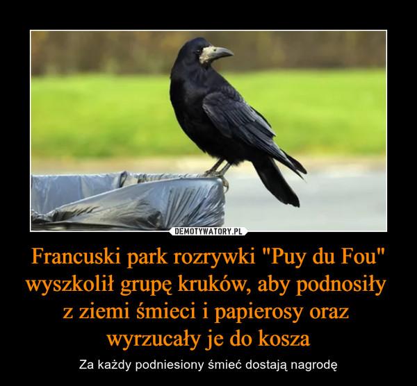 """Francuski park rozrywki """"Puy du Fou"""" wyszkolił grupę kruków, aby podnosiły z ziemi śmieci i papierosy oraz wyrzucały je do kosza – Za każdy podniesiony śmieć dostają nagrodę"""