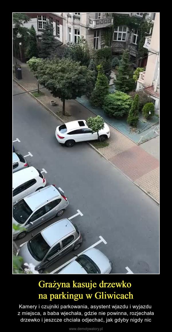 Grażyna kasuje drzewko na parkingu w Gliwicach – Kamery i czujniki parkowania, asystent wjazdu i wyjazdu z miejsca, a baba wjechała, gdzie nie powinna, rozjechała drzewko i jeszcze chciała odjechać, jak gdyby nigdy nic
