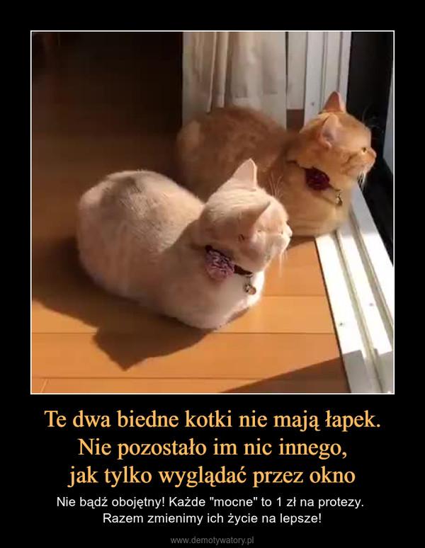 """Te dwa biedne kotki nie mają łapek.Nie pozostało im nic innego,jak tylko wyglądać przez okno – Nie bądź obojętny! Każde """"mocne"""" to 1 zł na protezy. Razem zmienimy ich życie na lepsze!"""