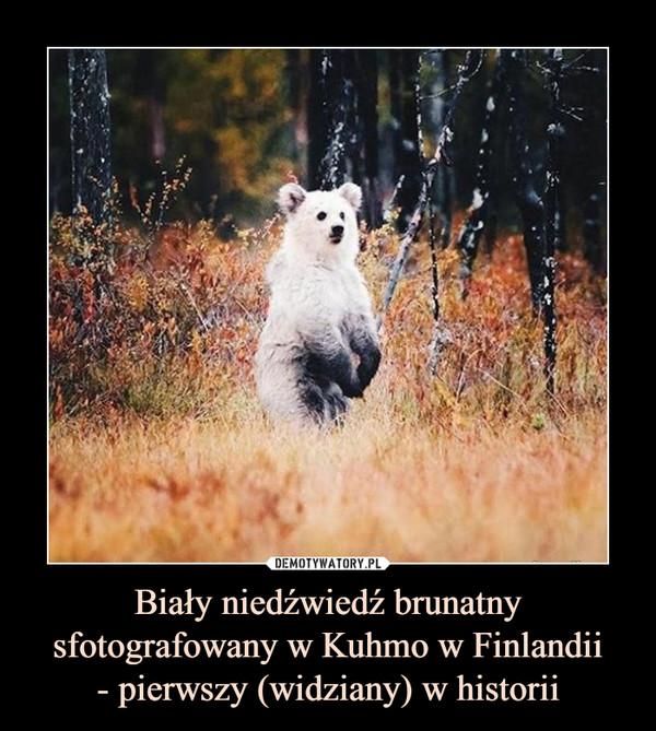 Biały niedźwiedź brunatny sfotografowany w Kuhmo w Finlandii- pierwszy (widziany) w historii –